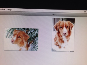 The picture to the right is the one I used of our dog Sage.